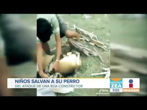 ¡Niños salvan a su perro de ser devorado por serpiente!