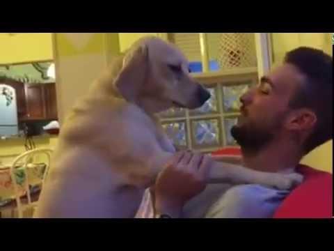 perro pide perdon