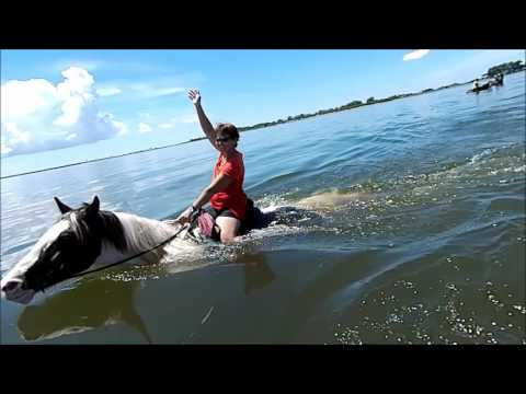 CPonies Beach Horseback Rides - St Petersburg, Florida - Skyway Bridge