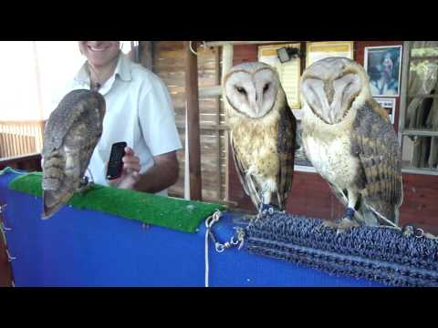 Have you ever seen an owl react to a Kesha song?