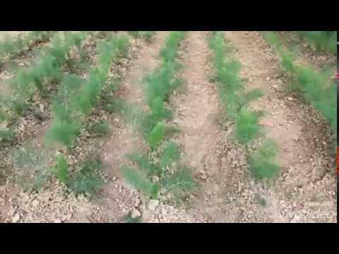 Agri Bio Market ti aspetta per la Giornata Bio VIDEO | Corropoli