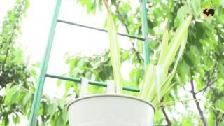 Зонирование сада с помощью арок. Сад день за днем