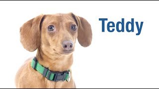 Meet our December Second Chances Calendar Star - Teddy!