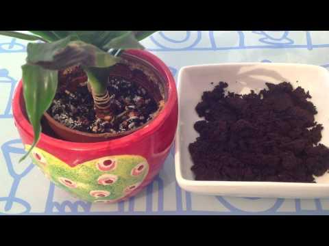 Comment traiter les pucerons sur les haricots verts la r ponse est sur - Comment congeler des haricots verts du jardin ...