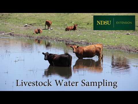 Testing water quality for livestock