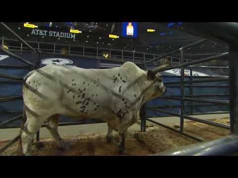 The Battle For The WORLD CHAMPION Bucking Bull Title 2020!