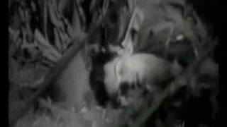 IRAQ war 2008 clip US army in iraq insurgency attacks clip guerrilla warfare insurgents wasted gunship action hellfire missile takes out terrorists apache k...