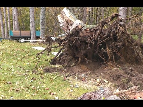 Man pulls giant stump with a tiny tractor, 8 horse power, and Archimedes wet dream.