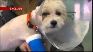 RDI Économie - Regroupement d'établissements vétérinaires