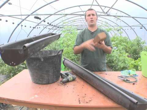 Cómo sembrar gisantes en jardinera colgante//Balcón comestible//LlevamealhuertoTv