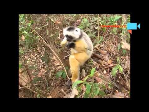 lemuři, Madagaskar