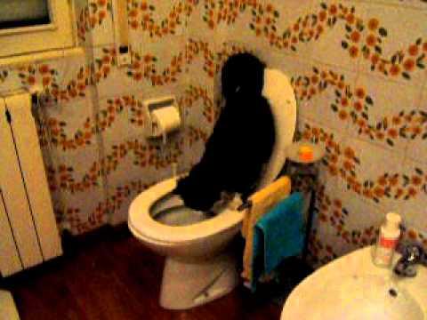 incredibile!! un gatto che fa i bisogni nel water