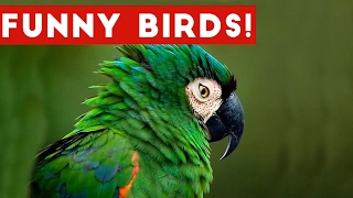 Funny Bird Videos Weekly Compilation 2017 | Funny Pet Videos