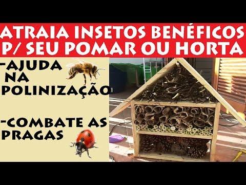 Construa um Hotelzinho de Insetos Benéficos para seu Pomar ou Horta!!