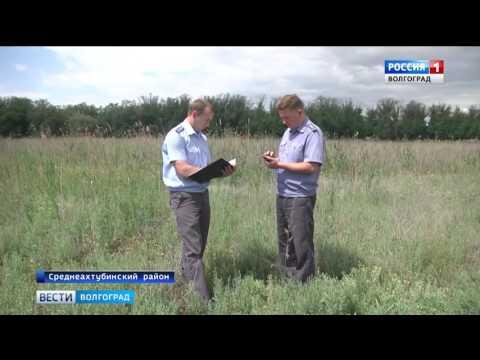 О выявлении очага карантинного сорняка на территории Волгоградской области