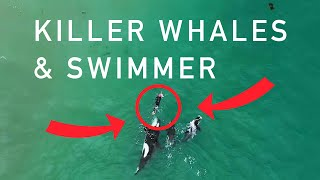 Orcas playing with swimmer at Hahei Beach, New Zealand (Original)