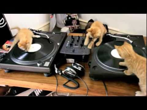 Kittens on DJ Turntable Decks