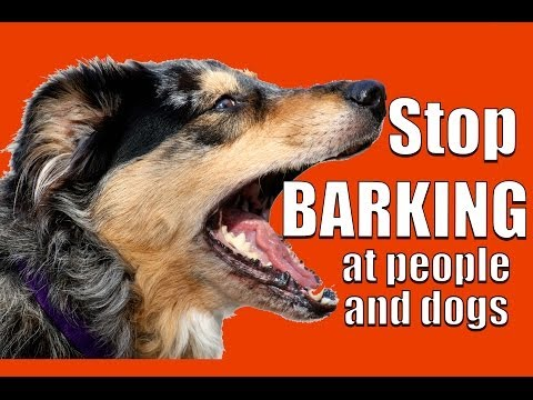 TEACH ANY DOG NOT to BARK at Other DOGS and PEOPLE on a Walk