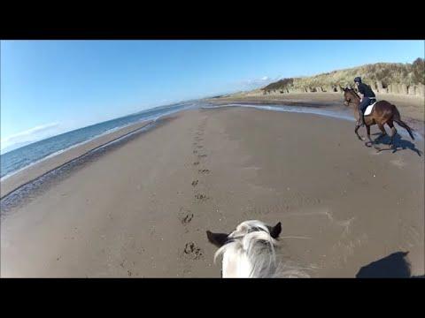 Horse Riding at Irvine Beach