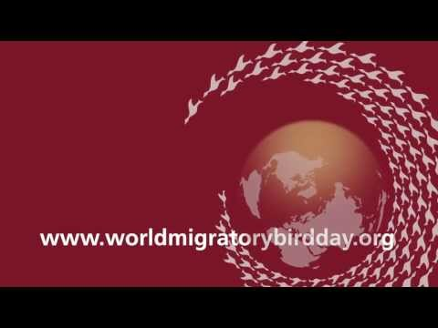 World Migratory Bird Day 2013 campaign trailer
