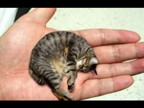 13 Smallest Animals In The World (видео)