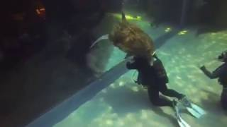 Eric Werne from Baden, Switzerland shared this delightful video with us. It features Yoshi, our resident loggerhead turtle at the Two Oceans Aquarium, surprising Iain Robertson, our resident dive master, from above! Eric says he loves scuba diving because it allows him to explore the wonderful underwater world; the best thing about diving at the Aquarium for him was the proximity to the animals.You can diver here too! Click here for more information: http://www.aquarium.co.za/content/page/diving