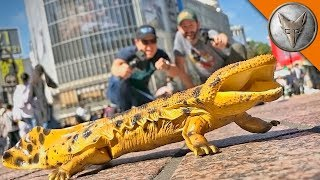 Catching GIANT SALAMANDERS in TOKYO! by Brave Wilderness