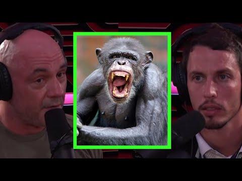 Joe Rogan Talks About Chimp Attacks