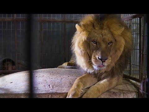 Διάσωση άγριων ζώων από τη Γάζα