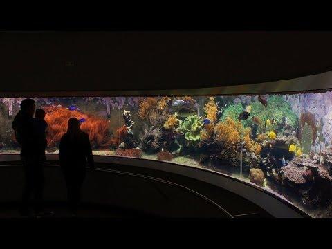 Aqua-Zoo Düsseldorf mit Löbbecke-Museum