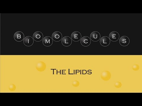 Biomolecules - The Lipids