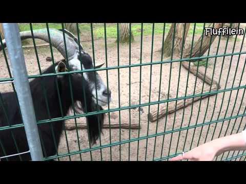 Wildpark Mainz Gonsenheim - Naherholungsgebiet für di ...