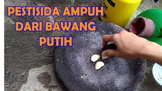 Video #TIS#Bawang Putih AMPUH Basmi Hama Tanaman|Organik,Cabe,Tomat,Sawi |Organik Pesticide from Garlic MP3, 3GP, MP4, WEBM, AVI, FLV Juli 2018