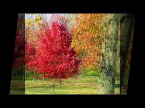 Tekst piosenki Bing Crosby - Autumn Leaves po polsku