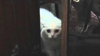 Кошка говорит УХОДИ