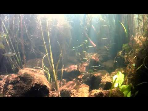 рыбалка на теше в арзамасском районе
