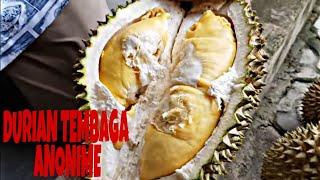 Video Durian tembaga 11 butir cuma 250 ribu . Jangan lupa like dan subsribe nya MP3, 3GP, MP4, WEBM, AVI, FLV Februari 2019