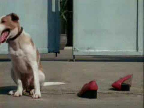 難怪狗的鼻子這麼靈敏,看來每一個人都要小心了!
