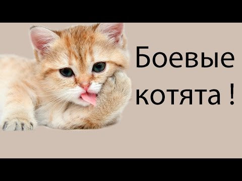 Боевые котята !