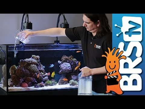 How to: Dosing Two Part in Your Reef Tank