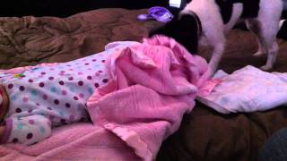 Dog Covers Baby With Blanket