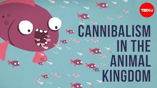 Download Youtube: Cannibalism in the animal kingdom - Bill Schutt