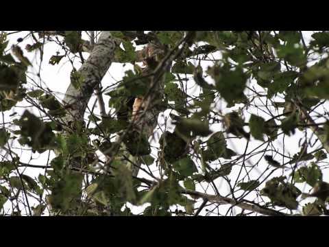 Melnā dzilna 20.10.2013 (видео)