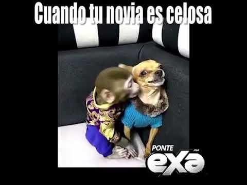 Video Cuando tu novia es celosa download in MP3, 3GP, MP4, WEBM, AVI, FLV January 2017