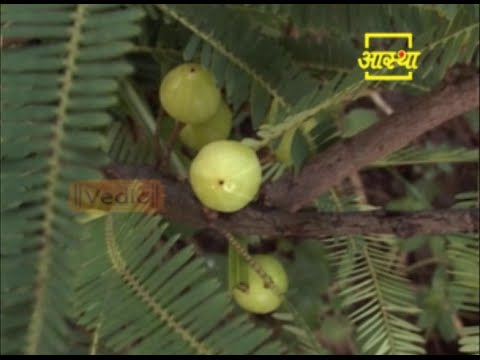 Use Amla  in hair loss