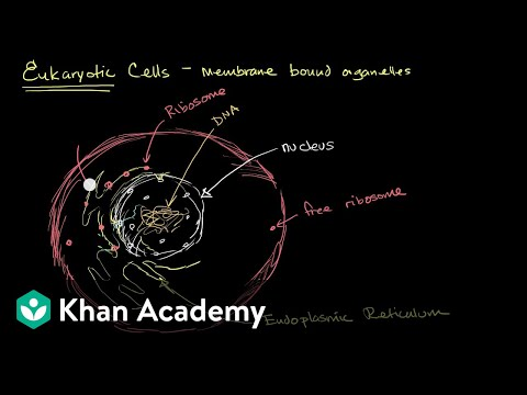 Organelles In Eukaryotic Cells Video Khan Academy