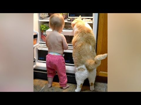Funny cat videos - CRAIZIEST FUNNY ANIMAL VIDEOS you'll EVER SEE! - DIE from LAUGHING RIGHT NOW!
