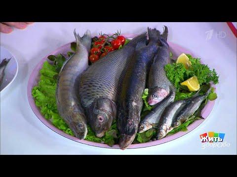 Жить здорово Плоды рыбалки: всем ли хороша речная рыба(10.07.2018) - DomaVideo.Ru
