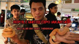 Video BELANJA ULAR DI REPTILE UNITED EXPO JAKARTA MP3, 3GP, MP4, WEBM, AVI, FLV Desember 2018