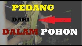 Video AJAIB !!! ANEH !! PEDANG EMAS dari dalam POHON, bisa dibuktikan LANGSUNG Part :  2 (ending) MP3, 3GP, MP4, WEBM, AVI, FLV Desember 2018